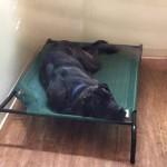 off floor bedding in kennel