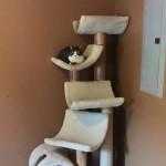 multi-tier cat climber