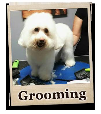 grooming-framed